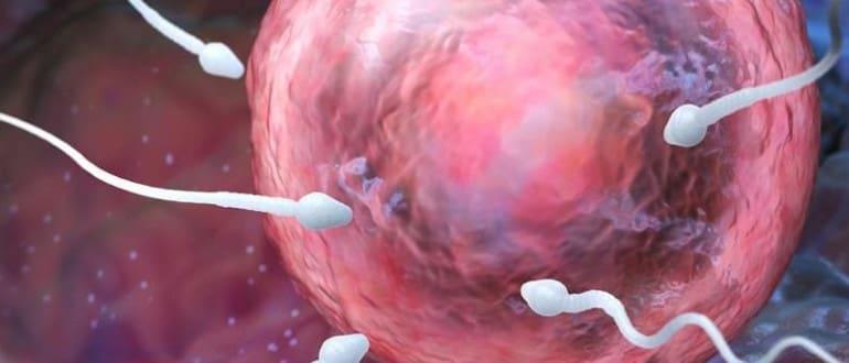 Отсутствие спермы при оргазме