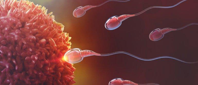 Рекорд по сперме