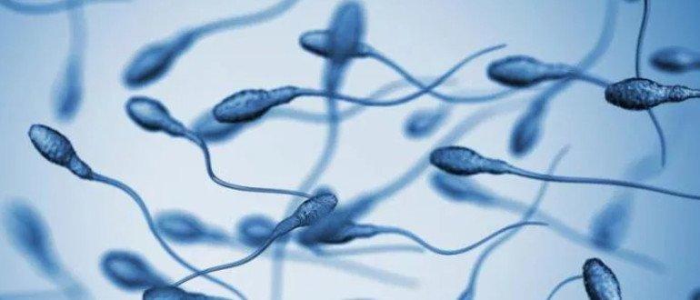 агглютинация спермы