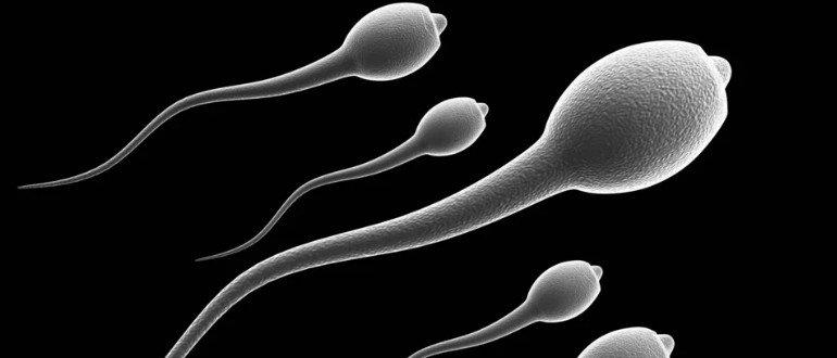 есть ли в смазке сперма