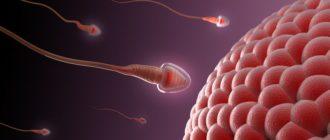 где хранится сперма
