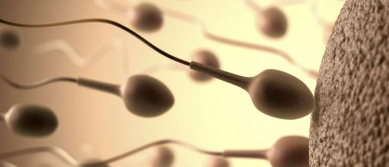 куда девается сперма после секса