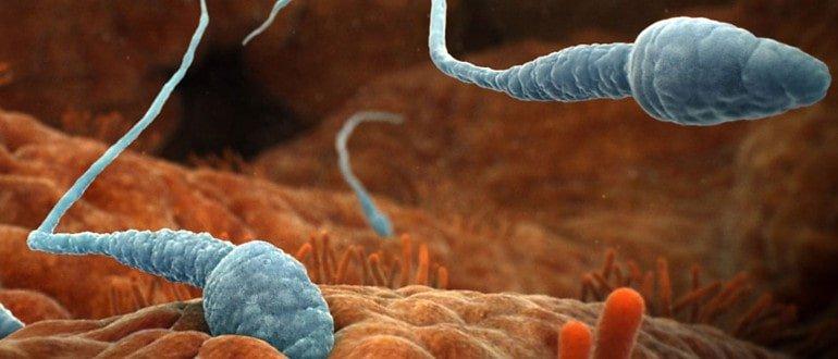 вред спермы